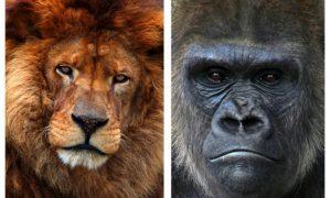 Dieren Olmense Zoo verklaren onafhankelijkheid