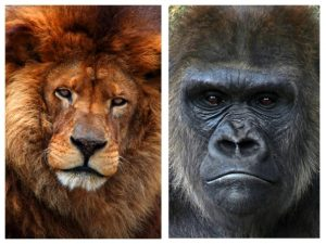 Rudy De Leeuw en Gust De Gorilla