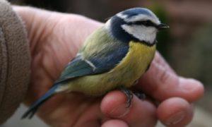 Ornithologen formeel: 1 vogel in hand beter dan 10 in lucht