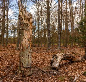 De levenloze bomen (Foto: Dominicus Johannes Bergsma)