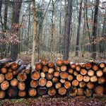 Joke Schauvliege: 'Zoniënwoud moet wijken voor strijd tegen transmigranten; groot bedrijvenpark'