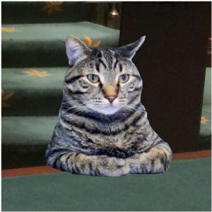 Kat van Theo Francken heeft handen vol in de Kamer