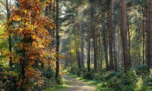 Milieu verliest milieuvergunning