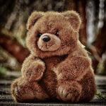 Vlaamse berenpopulatie inmiddels weer gehalveerd