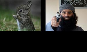 POLL: Schattige dieren of migranten?