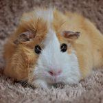 Hamsterwinkel De Hamsterwinkel roept hamsteraars op niet langer hamsters te hamsteren