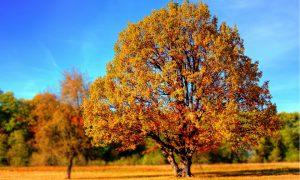 Mysterieuze, massale bladerval treft vooral westerse landen