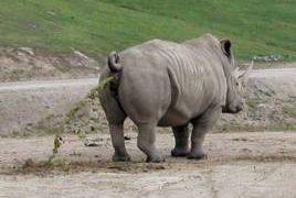 Griepvirus treft ook zoo Antwerpen