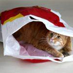 Kat in zak fors duurder geworden