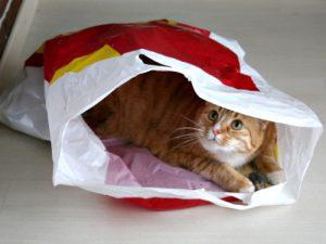 De prijs van een kat in een zak is meer dan verdubbeld de afgelopen maanden.
