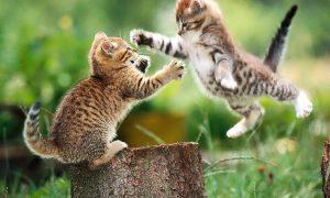 Binnenkort nóg meer schattige diertjes op VTM-Nieuws