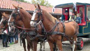 Het paard: een relatief goedkoop transportmiddel (Beeld: YouTube)