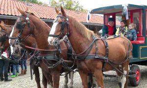 Brandstofprijzen blijven stijgen: paard en kar opnieuw populair