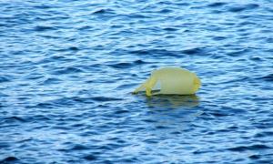 Europa stuurt Syrische vluchtelingen plastic zakjes om in te stikken