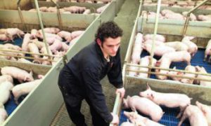 Veiligheidsmaatregelen voor varkens