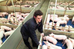 Deze boer is er niet gerust in dat de varkens de nacht zullen overleven
