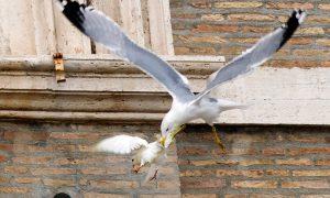 Vaticaan bewijst per ongeluk evolutietheorie
