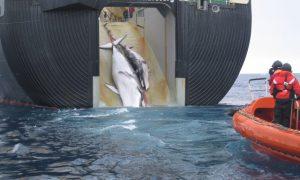 Walviskunde op kruissnelheid